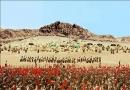 La réalité de la bataille d'Ohod