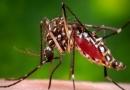 मच्छर पर सवार वहाबियों का  ख़दा