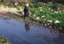 Zionist, Poison, Palestinian, West Bank, toxic pesticides, hazardous