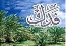 fadak, Zahra, Fatimah, daughter, Ahlulbayt, usurpation, Abu-Bakr, throne