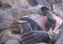 تلفات جانی و سنگین مزدوران آل سعود در یمن