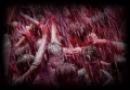 مستند باران خون در روز عاشورا / در عاشورا از زیر سنگها خون تازه جاری بود